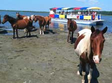 Assateague cruises