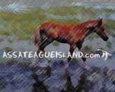 Click here for Assateague Ponies and more...