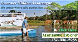 Discover Hidden Assateague
