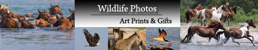 Widlife Photos - Art Prints & Gifts