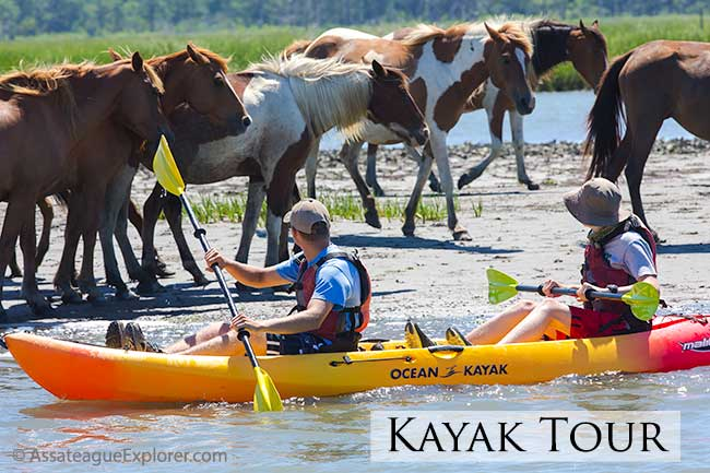 Assateague Explorer Kayak Tour