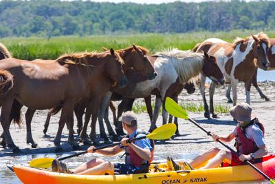 Chincoteague Kayak Tours By Ateague
