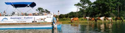 Assateague Explorer's captain is a Chincoteague Island native that can take you to Assateague's hidden areas!